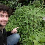 La Salvia, ottima per condire ed auto-produrre saponi e dentifrici