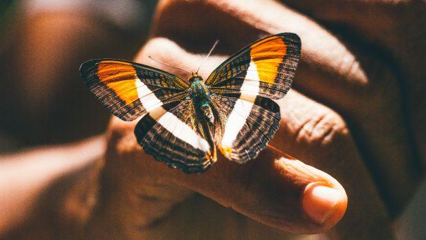 Cos'è l'Effetto Farfalla? Una Filosofia che cambia la vita